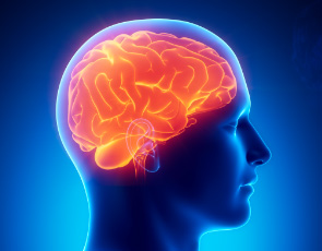 health-workshop-brain-fitness